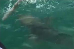 incredible video giant fish swallows shark as shocked fishermen