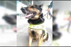 colombian drug mafia puts  70 000 bounty on police dog s head