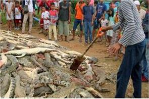 indonesia crocodile sugito police