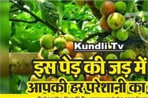 remedies of bad effects of venus by gular plant