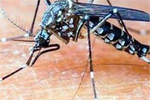 outbreaks of dengue not stopping here 8 new cases registered