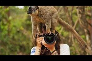 make a career in wildlife photography will earn big money