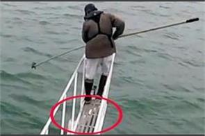 white shark jumps out of water to attack man watch video