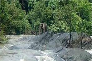 kerala prevention stops dam water for saving elephants from drowning