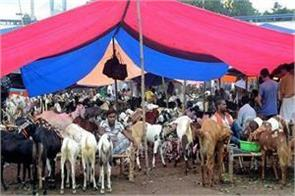 eid sultan market pagember ibrahim
