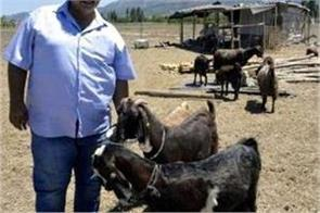 turkish club sell 18 players to buy 10 goats