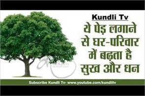 happiness and wealth increase in home and family by planting this tree