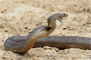 snake medicine iit anurag rathore