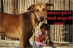 how to protect the girl s pet dog
