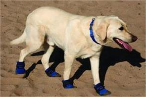 here the police appealing to the dogs to wear shoes  hot dog campaign