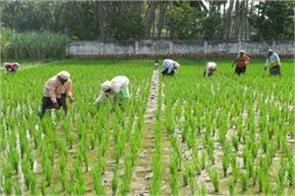 roots of paddy banana and spices in 45 000 hectares of flood from kerala