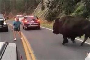 man gets 130 days in jail for harassing bison