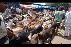 bakaeid celebrations starts in kashmir valley