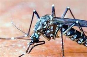 death of two person from dengue in himachal 1588 people in grip