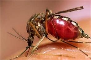 dengue rallied bilaspur so far 24 new cases are registered