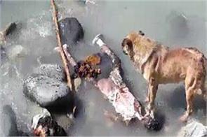 dogs eating dead bodies at kedar ghat