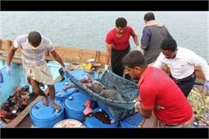 17 fishermen killed in yemen s red sea