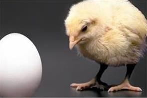 what came first chicken or egg physicists finally have the answer