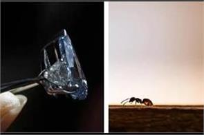 this ant stealing the world s tiniest diamond