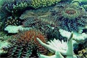 robot drone could protect great barrier reef by killing crown of thorns starfish