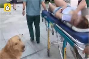 heart will see the dog s attachment to the mistress see the video