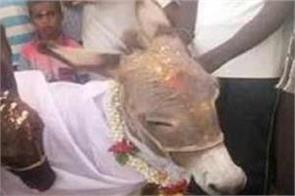 donkey marriege in karnataka