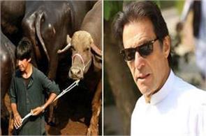 imran buys nawaz sharif s buffalo auctioned raised rs 23 lakhs