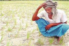 pitiful condition and helplessness of farmer