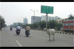 capture of unclaimed animals on the streets of mohali