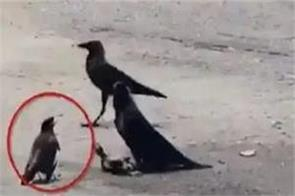 a bird played on its life to save the child