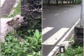 dog died because of open panel of street light