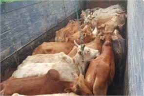 animal smuggling attempt failed 16 animals recovered from truck