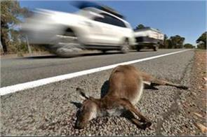 australian teenager kills car on kangaroos kills 20