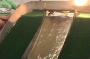 ducklings enjoy makeshift water slide video viral