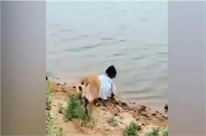 cute video viral of little girl and dog