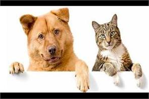 dogs and cats also donate blood in us and uk