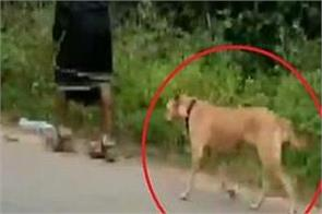 a stray dog has been following a group of 13 ayyappa devotees