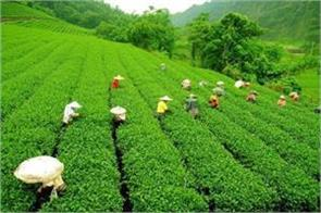 small producers biggest threat from blf chairman of tea board