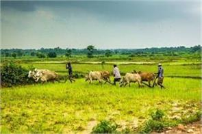 farmers should reduce paddy wheat cultivation otherwise it may suffer losses