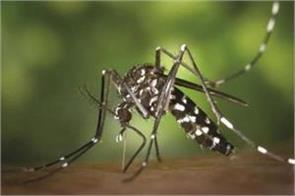 dengue havoc continues samba district most affected