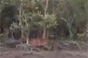 social media tiger video viral officer praveen kaswan