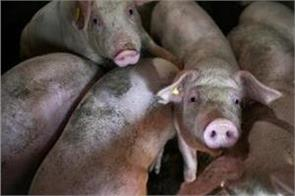 chinese inflation hits eight year high as pork prices double