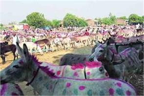 the donkey market is set in this city of the country