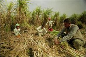 cane farmers  dues increase government s difficult