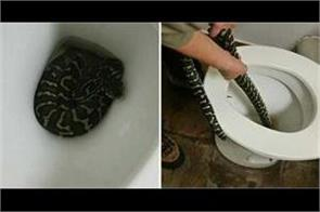 woman bitten by snake hiding in toilet