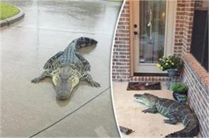 us women got amazed seeing crocodile at door in florida