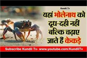 in ramnath shiv ghela temple devotees offer live crab to lord shiva