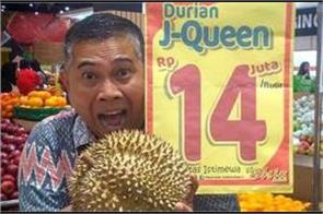pungent  j queen  durians sell for 1 000 in indonesia