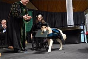dog gets diploma clarkson university honoured service dog with honorary diploma