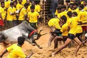 40 people injured in junk kattu control